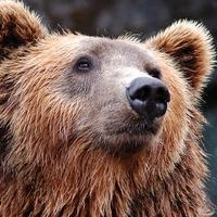 Auf Bärenjagd