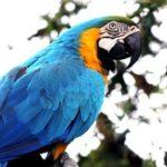 Papagei Huren