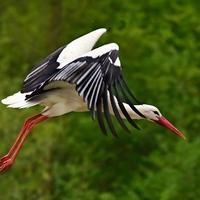Der Storch kommt