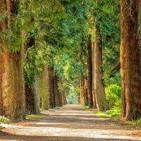 An Bäumen üben